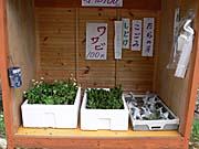 山菜とわさびの無人販売