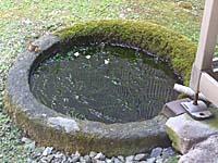 温泉津温泉・恵珖寺宿坊米子屋の庭にある水たまり。沢ガニが生息している。