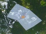 八重垣神社の鏡の池に浮かぶ占いの紙