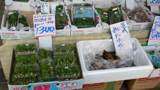 春の東北の山菜