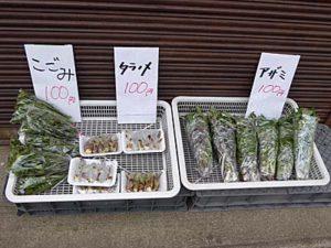 大鰐の道ばたで売っている山菜
